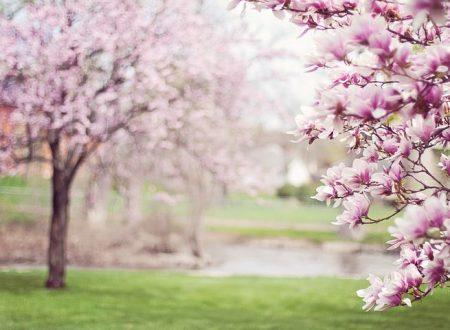 Ben tornata Primavera. I rimedi contro i malesseri di stagione